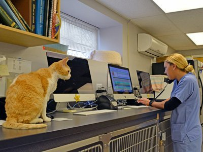 Veterinarian scheduling an appointment