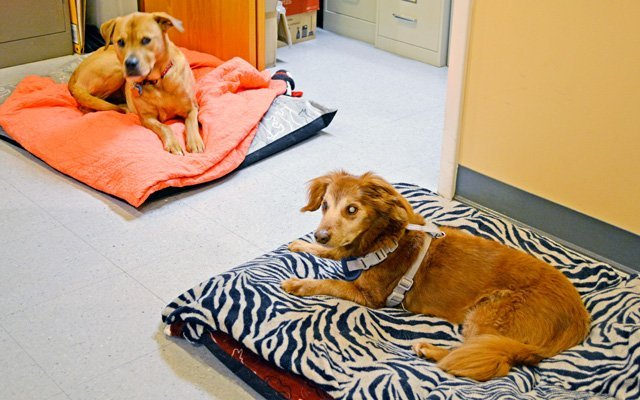 Essex Middle River Veterinary Center Office Dogs