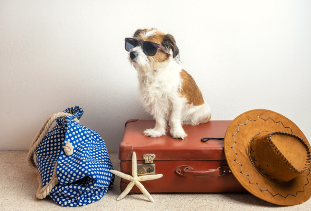 dog with suitcase and hat