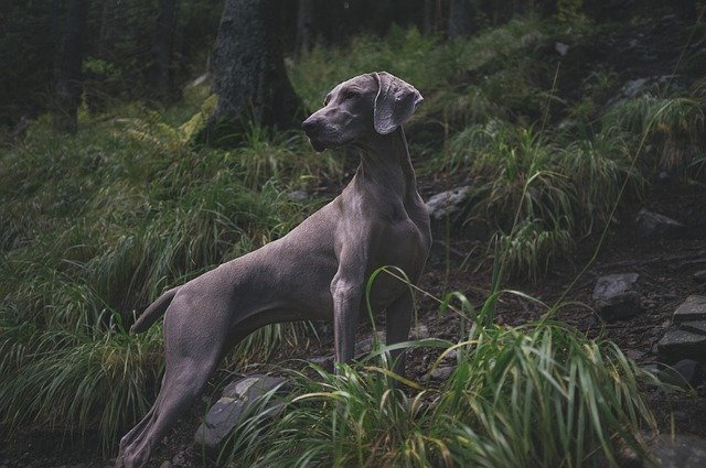 How to Protect Your Pet From Lyme Disease
