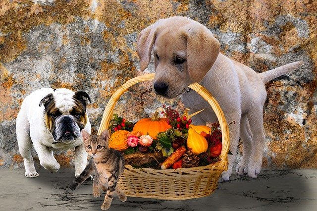 Thanksgiving Safety Tips for Cats and Dogs