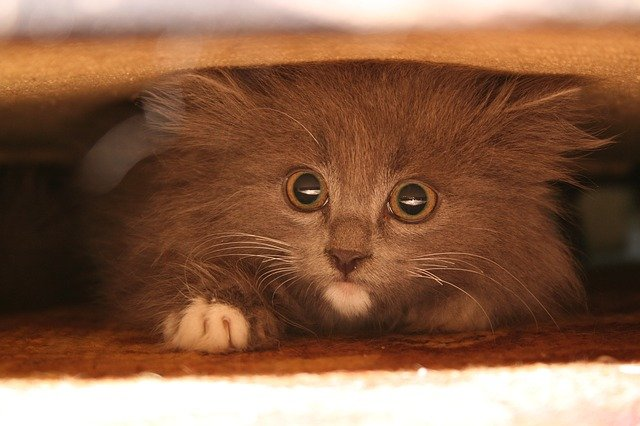 A cat with anxiety may hide under the bed, or a couch.