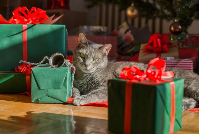 5 Wishes on Your Cat's Holiday List