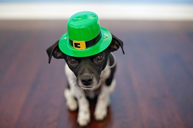How to Make Sure Your Pet Has a Good St. Patrick's Day