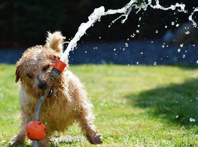 Dogs with access to outdoors should have plenty of access to fresh water and shade.