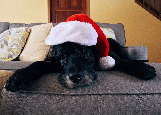 How To Keep Your Pet Safe During the Holidays