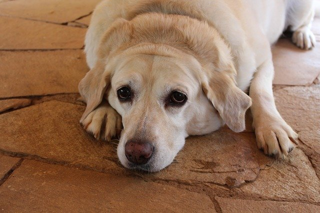 How to Know When Your Dog is Overweight