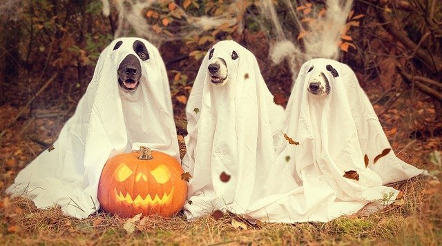 How to Keep Your Pet Safe and Stress-Free For Halloween