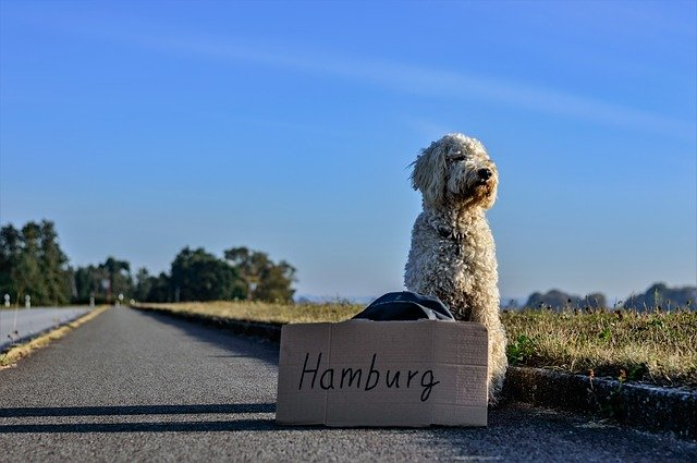 How To Get An International Pet Health Certificate For Travel