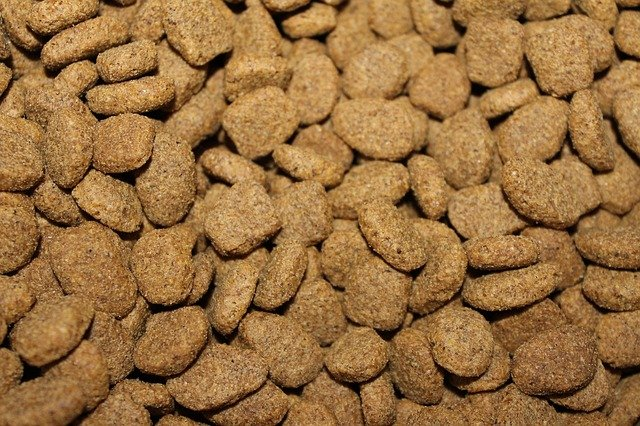 Grain-free diets can cause heart disease in dogs.